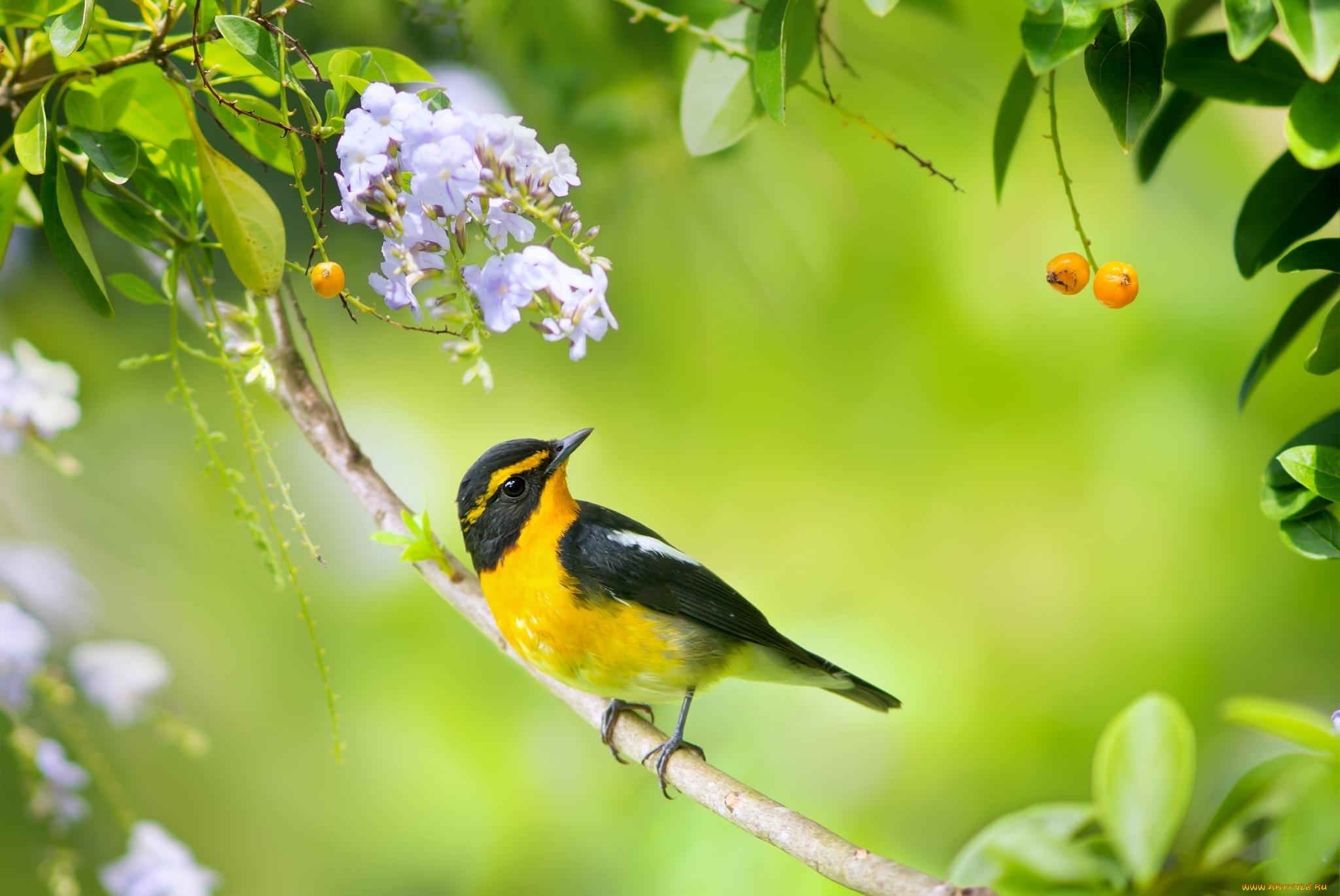 Птицы летом в картинках